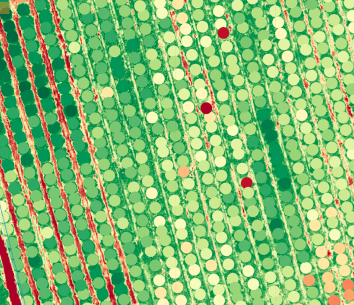 drone survey agriculture NDVI